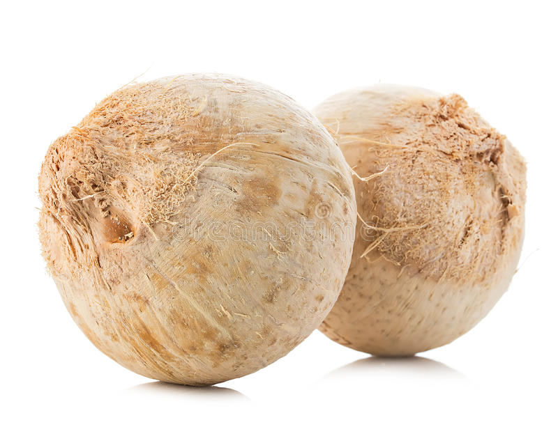 Jeune plan rapproché doux de noix de coco d'isolement sur le fond blanc image stock
