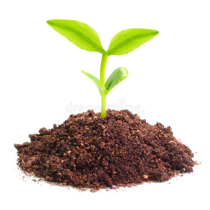 Jeune plante image libre de droits