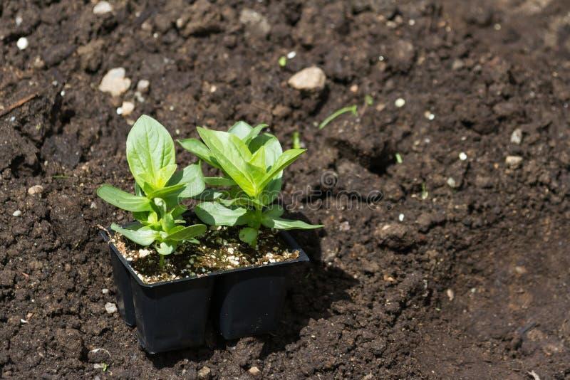 Jeune plante de fleur photographie stock libre de droits