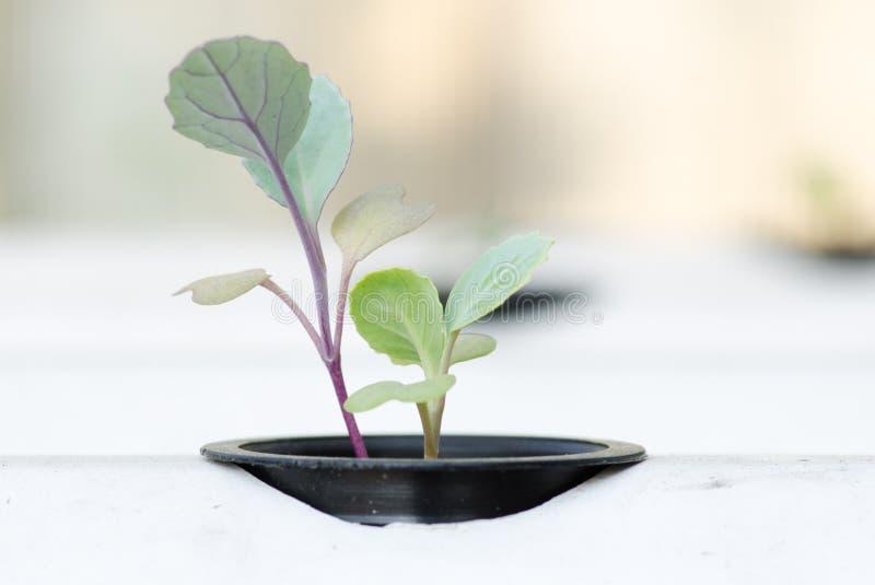 Jeune plante hydroponique de système photos libres de droits