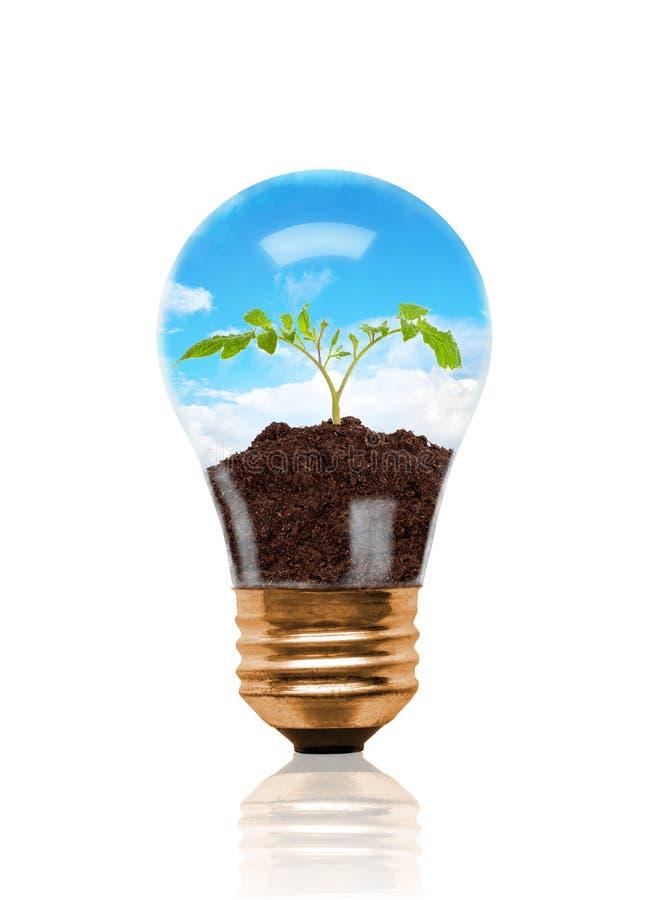 Jeune jeune plante s'élevant hors du sol à l'intérieur de l'ampoule illustration stock