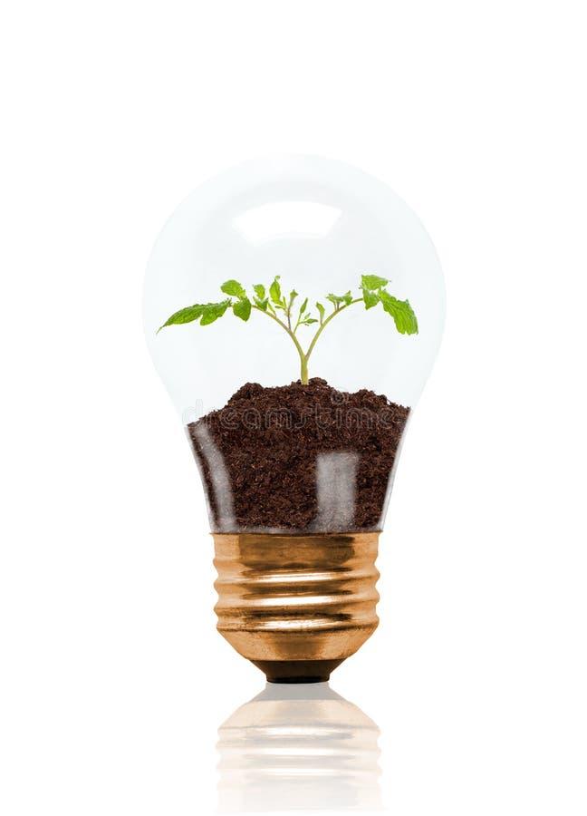 Jeune jeune plante s'élevant hors du sol à l'intérieur de l'ampoule illustration libre de droits