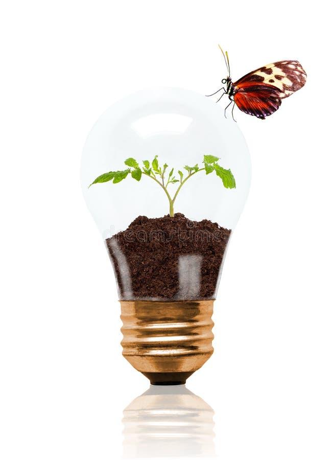 Jeune jeune plante s'élevant hors du sol à l'intérieur de l'ampoule avec du beurre illustration de vecteur