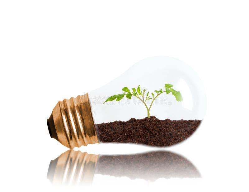 Jeune jeune plante s'élevant hors du sol à l'intérieur de l'ampoule avec la copie S photo libre de droits