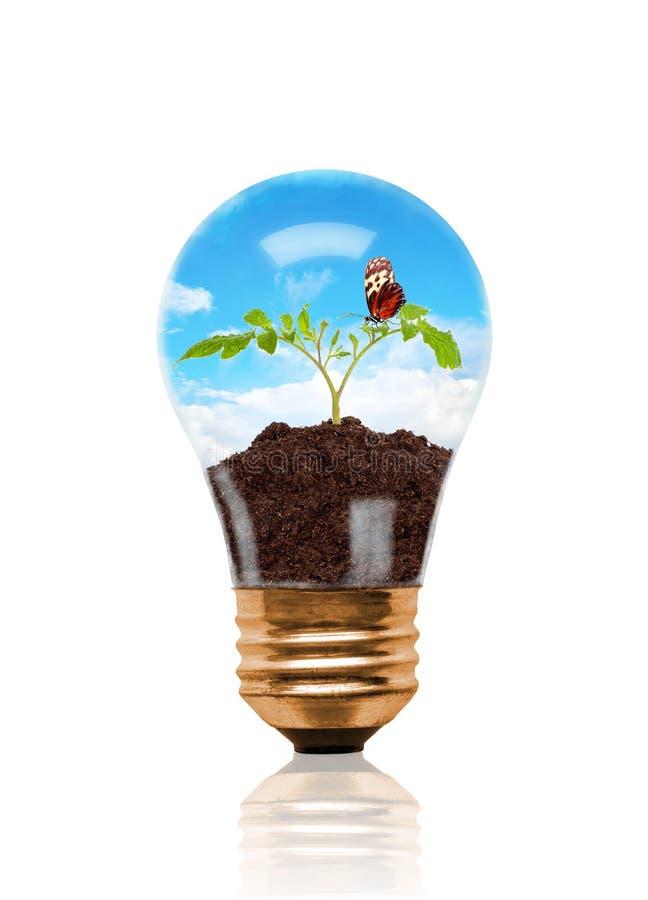 Jeune jeune plante s'élevant hors du sol avec le papillon à l'intérieur de l'ampoule illustration libre de droits
