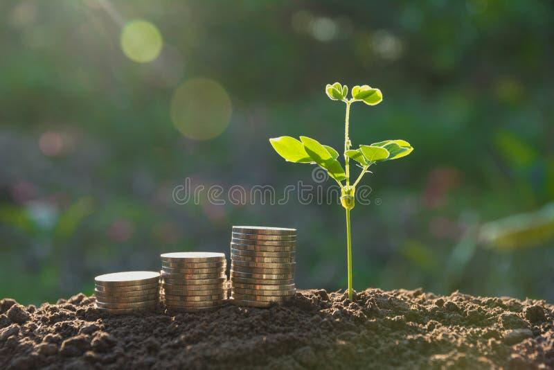 Jeune plante verte avec la pièce de monnaie de pile sur la terre pour des affaires croissantes images stock