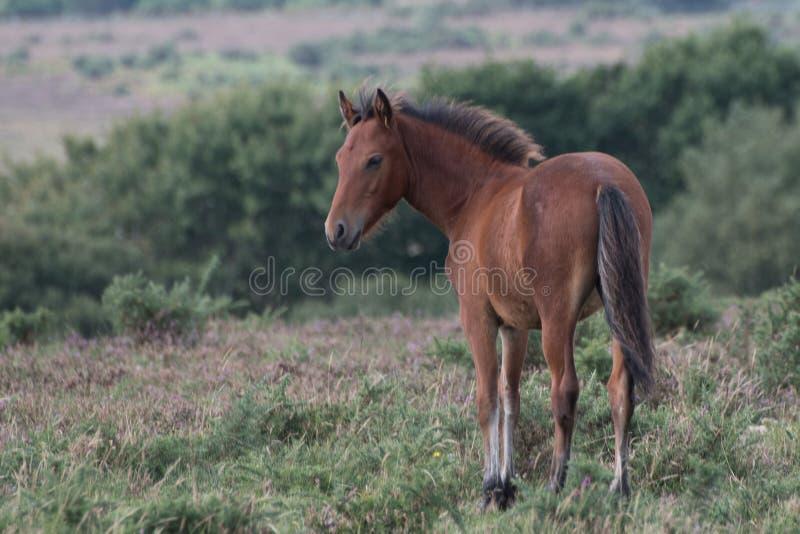 Jeune poney dans le nouveau Forect photo libre de droits