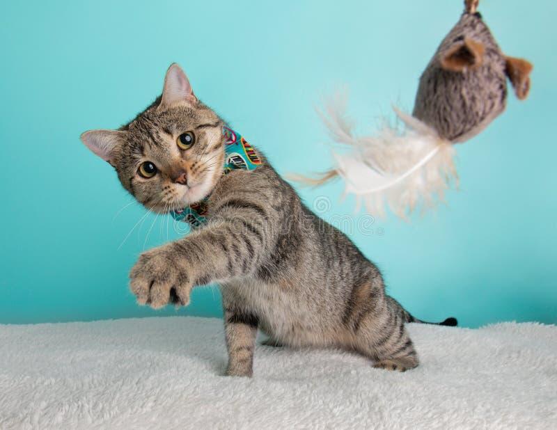 Jeune portrait mignon de costume de lien de Tabby Cat Wearing Blue Orange Bow se reposant regardant la souris Toy Paw Action image stock