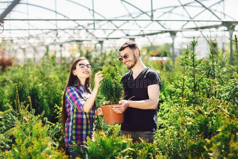 Jeune position de couples ensemble, tenant un pot avec un petit arbre de sapin et regardant une usine à la jardinerie images stock