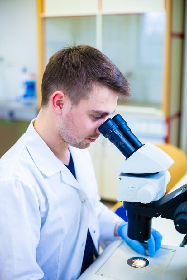 Jeune scientifique masculin avec un microscope vérifiant son échantillon image stock