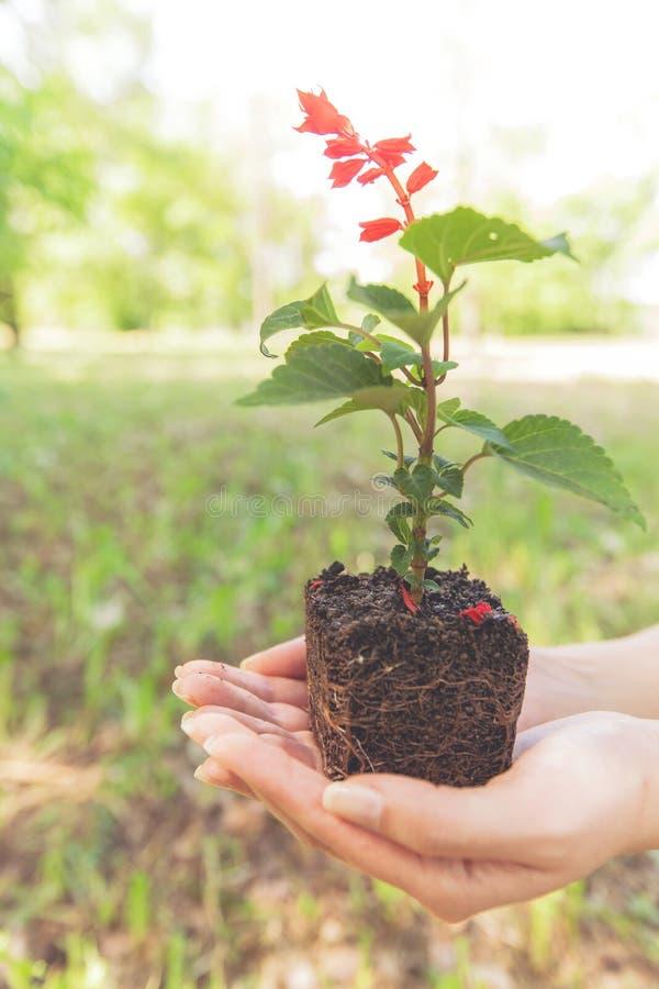 Jeune usine prête pour la jeune plante image libre de droits