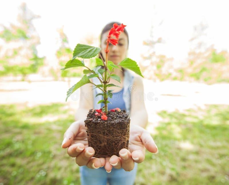 Jeune usine prête pour la jeune plante images libres de droits