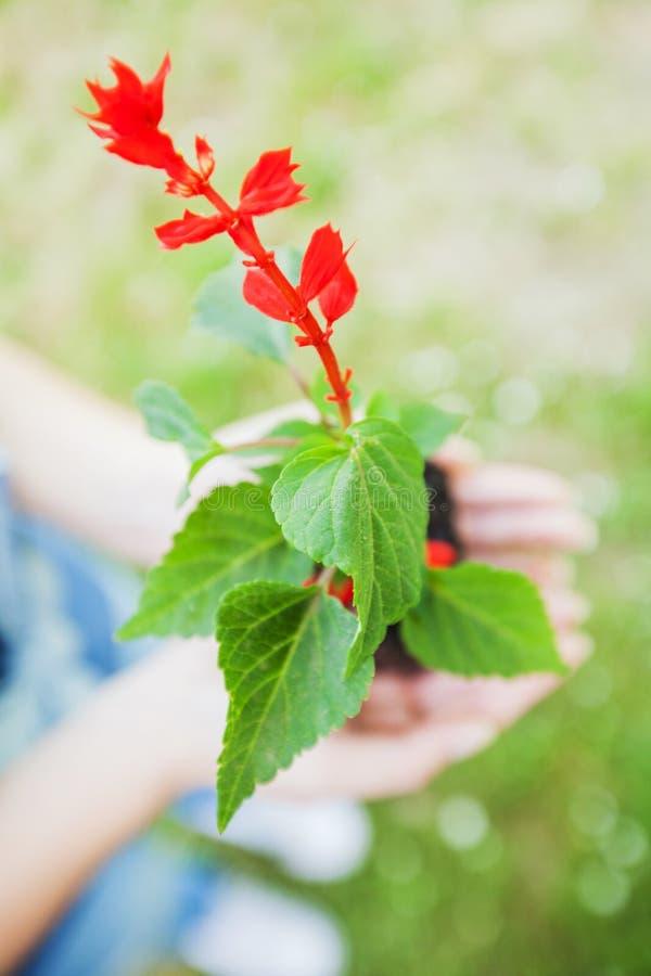 Jeune usine prête pour la jeune plante photo libre de droits
