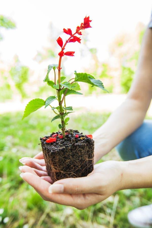 Jeune usine prête pour la jeune plante photographie stock libre de droits