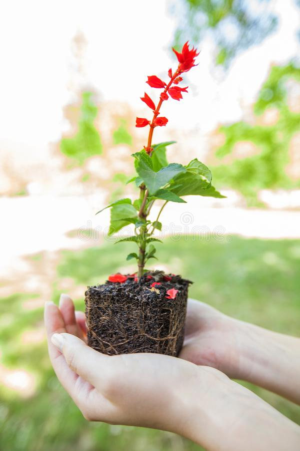 Jeune usine prête pour la jeune plante photo stock