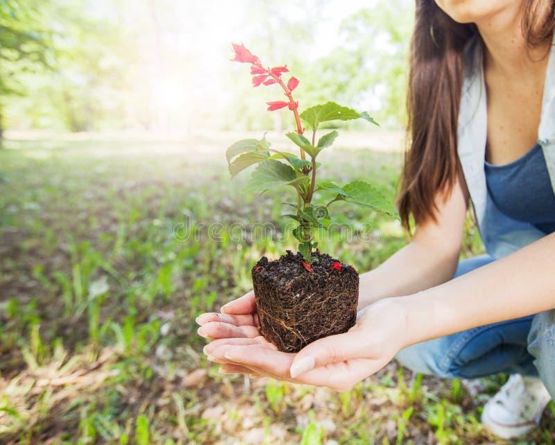 Jeune usine prête pour la jeune plante images stock