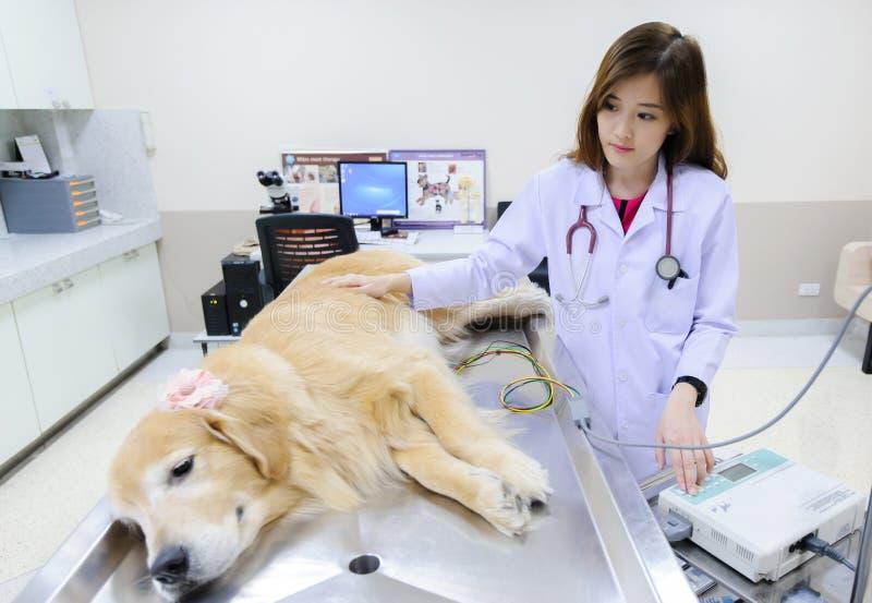 Jeune vétérinaire à l'hôpital images libres de droits