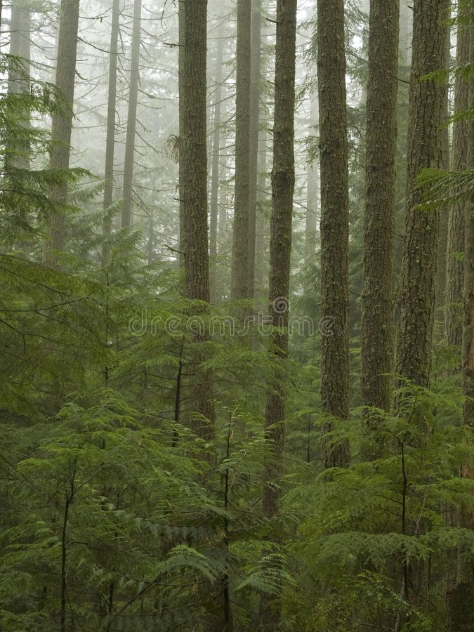Jeunes arbres photos libres de droits