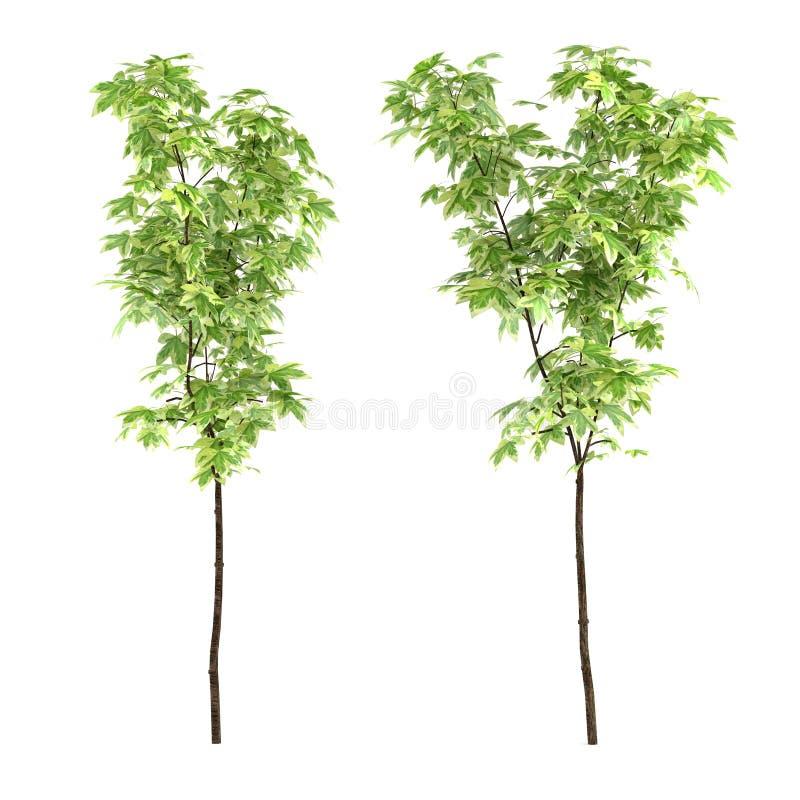 Jeunes arbres d'isolement illustration stock