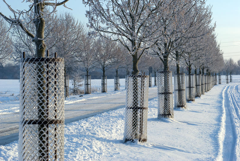 Jeunes arbres dans la protection images stock