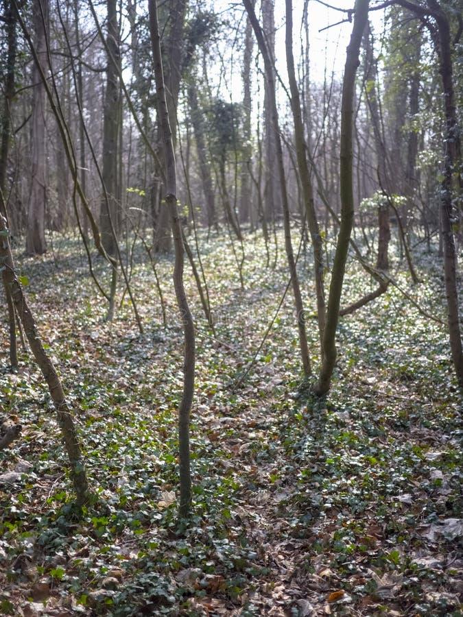 Jeunes arbres dans une région boisée froide image libre de droits