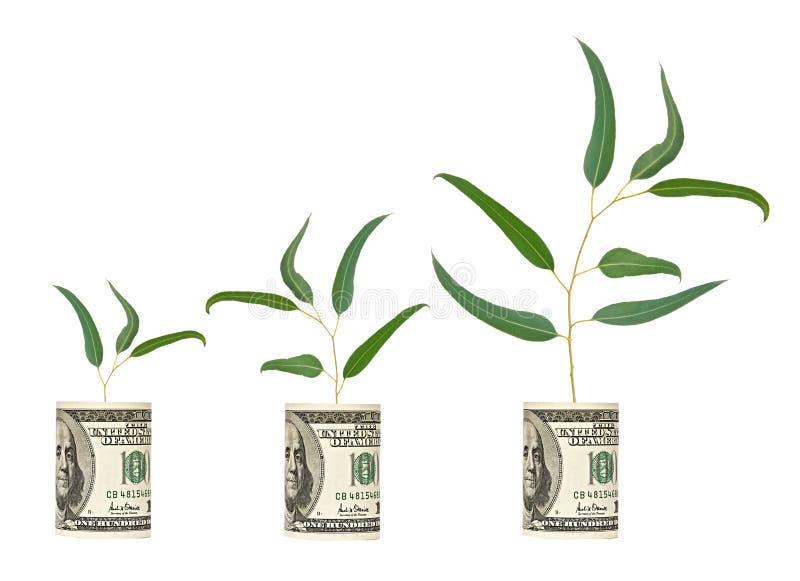 Jeunes arbres s'élevant du billet d'un dollar images libres de droits