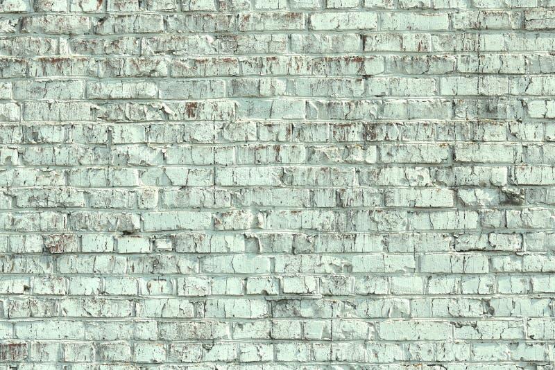 Jeunes bouleaux avec l'?corce de bouleau noire et blanche au printemps dans le verger de bouleau par temps brumeux photographie stock
