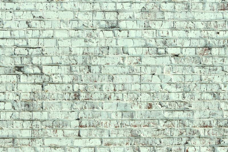 Jeunes bouleaux avec l'?corce de bouleau noire et blanche au printemps dans le verger de bouleau par temps brumeux photos stock