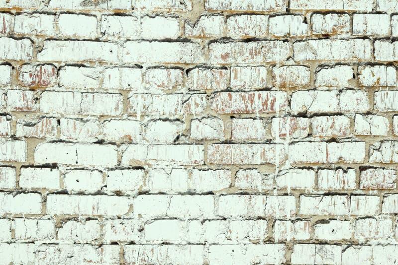 Jeunes bouleaux avec l'?corce de bouleau noire et blanche au printemps dans le verger de bouleau par temps brumeux images stock