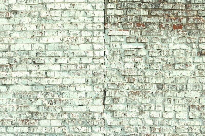 Jeunes bouleaux avec l'?corce de bouleau noire et blanche au printemps dans le verger de bouleau par temps brumeux photos libres de droits