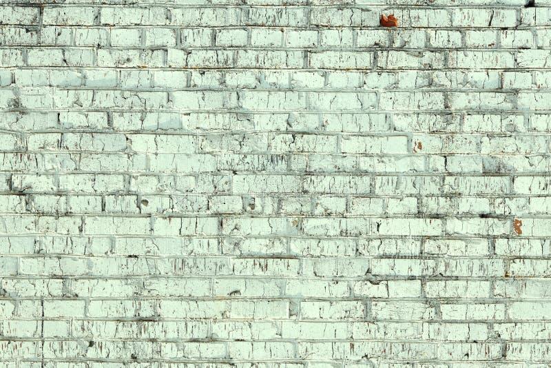 Jeunes bouleaux avec l'?corce de bouleau noire et blanche au printemps dans le verger de bouleau par temps brumeux image stock