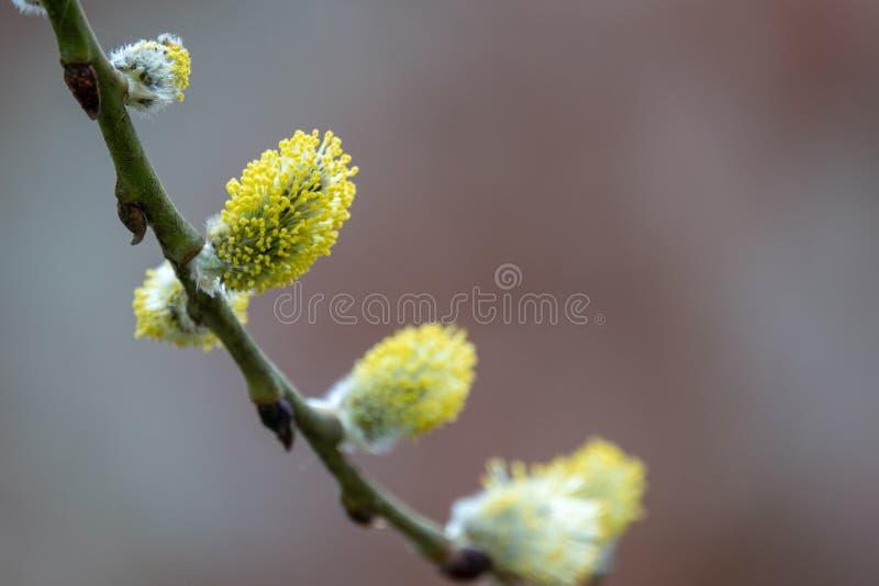 Jeunes bourgeons au printemps photographie stock libre de droits