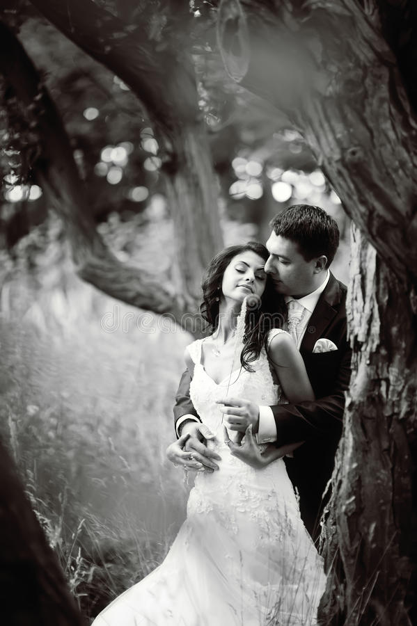 Jeunes couples de mariage dans la forêt image stock