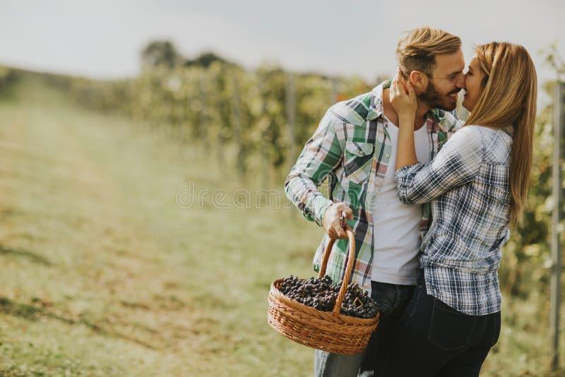Jeunes couples embrassant dans un vignoble photos stock
