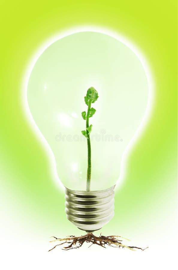 jeunes de tungstène de pousse de lumière d'ampoule photos libres de droits