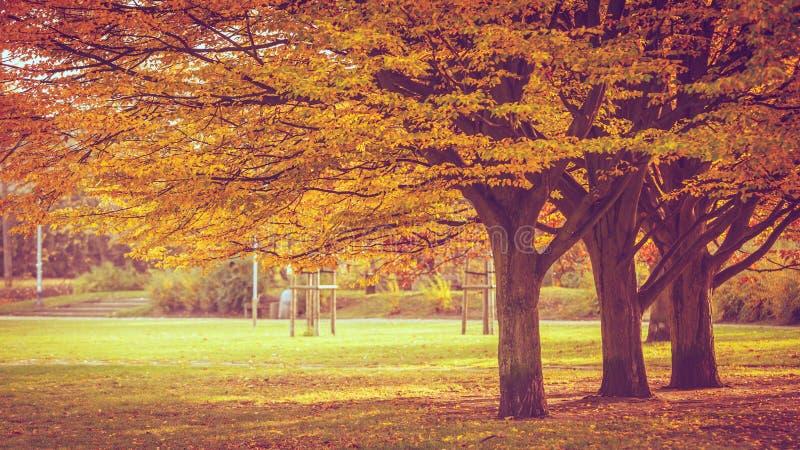 Jeunes et vieux arbres en automne image libre de droits