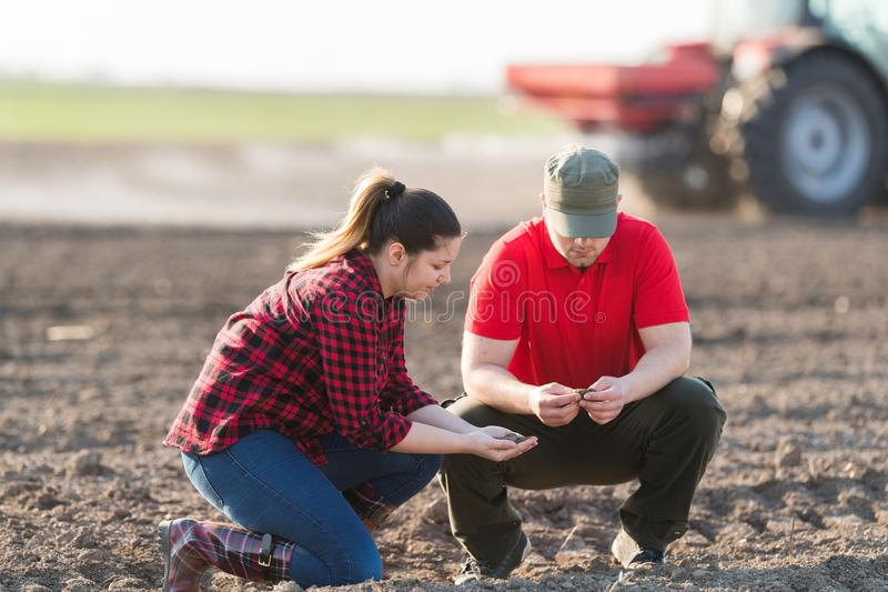 Jeunes exploitants agricoles examing les champs de blé plantés photos libres de droits