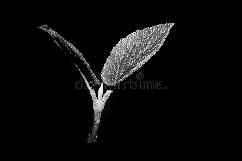 Jeunes feuilles photos stock