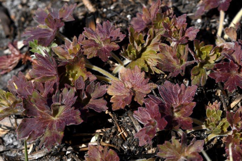 Jeunes feuilles colorées photos stock