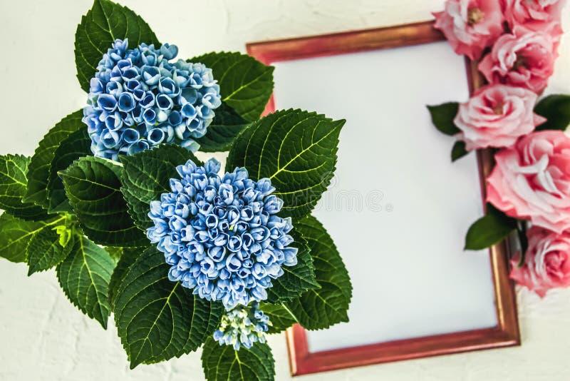 Jeunes fleurs d'hortensia bleues et cadre en bois rouge avec les roses roses image libre de droits