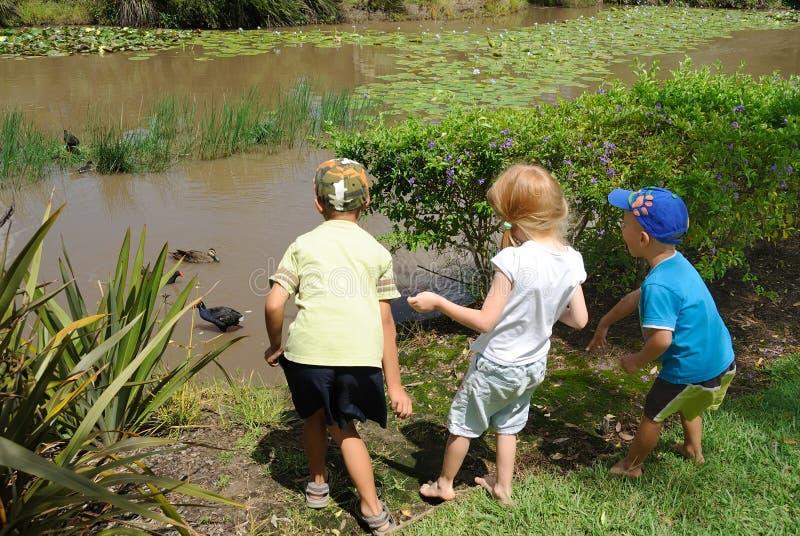 Jeunes garçons alimentant des canards dans l'étang photo stock