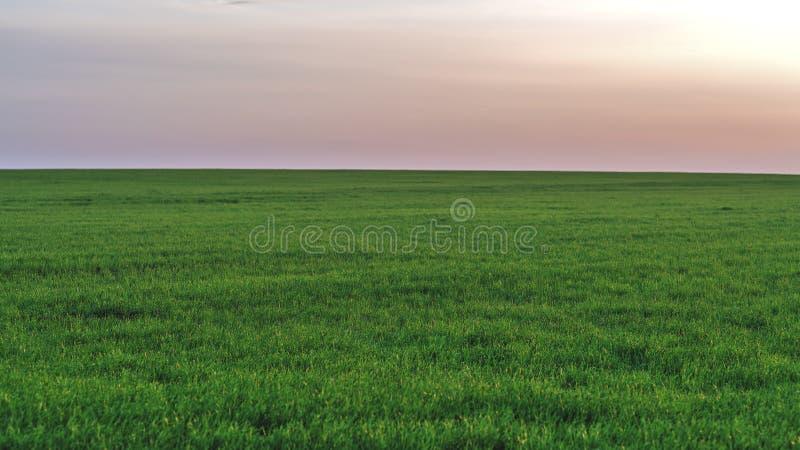 Jeunes gisements verts de ressort sur le fond du ciel de coucher du soleil images stock