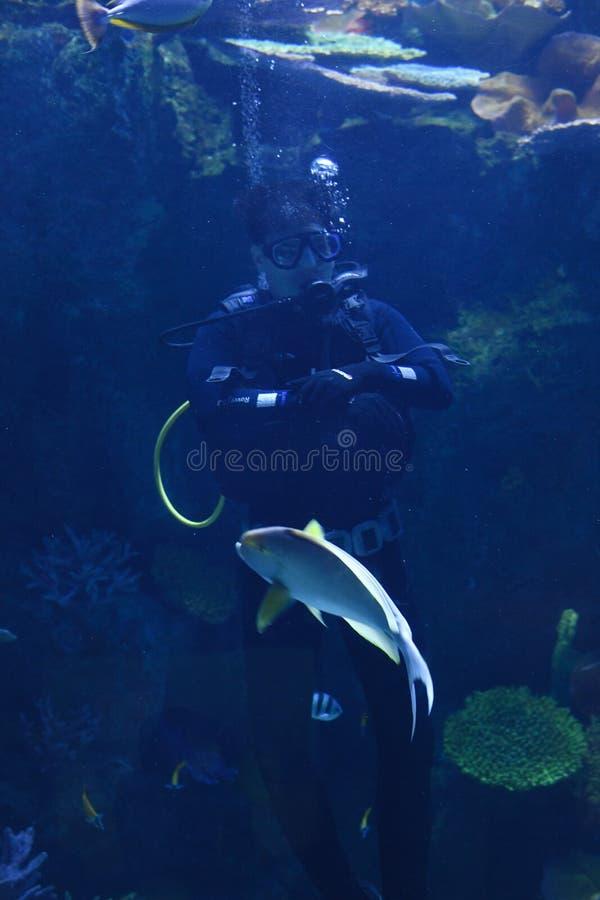 Jeunes hommes en nourriture de alimentation d'aquarium à se rassembler des poissons en monde Bangkok d'océan photographie stock
