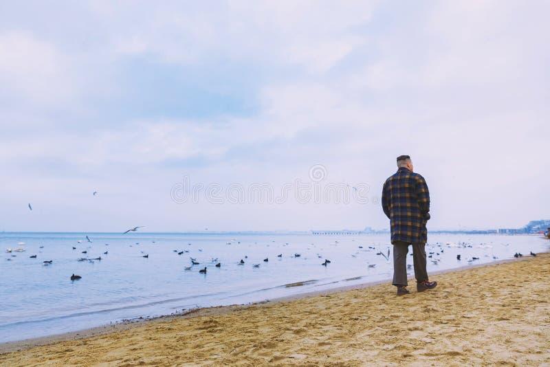 Jeunes hommes par la mer Mouettes de cygnes Temps froid bleu images stock