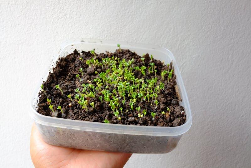 Jeunes jeunes plantes végétales sur le fond blanc images stock
