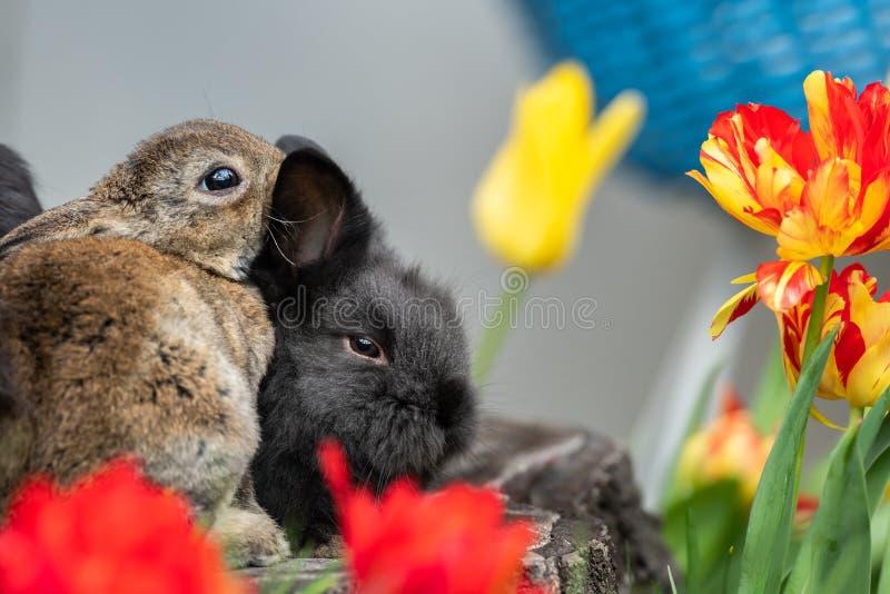 Jeunes lapins se reposant sur un tronçon d'arbre image libre de droits