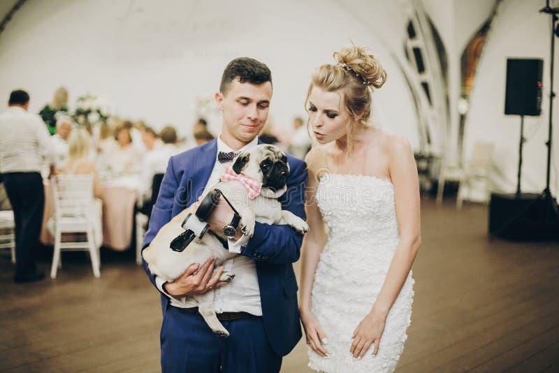 Jeunes mariés élégants étreignant et ayant l'amusement avec le chien de roquet dans le noeud papillon à la réception de mariage A photographie stock