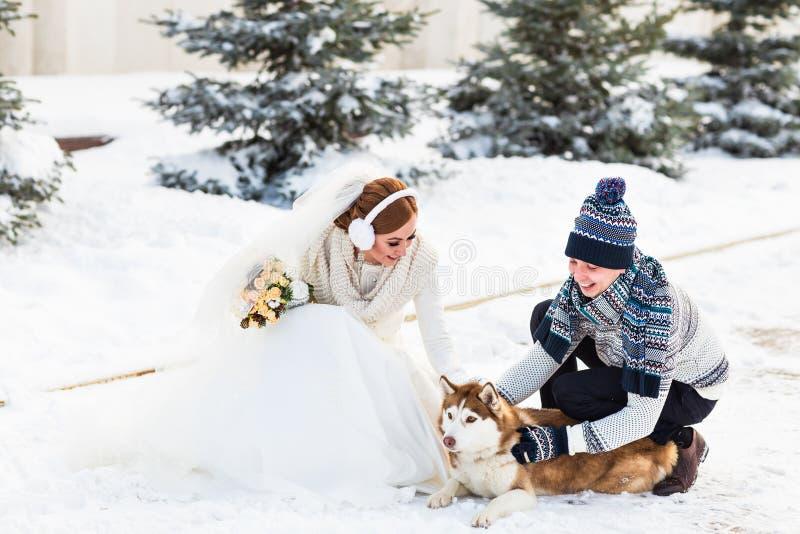 Download Jeunes Mariés Avec Des Chiens De Traîneau De Chien En Hiver Image stock - Image du jour, heureux: 77154843