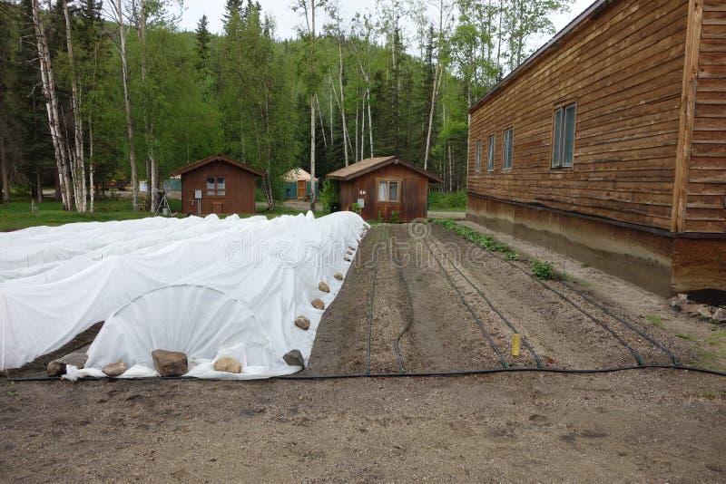 Jeunes plantes couvertes en Alaska photographie stock libre de droits