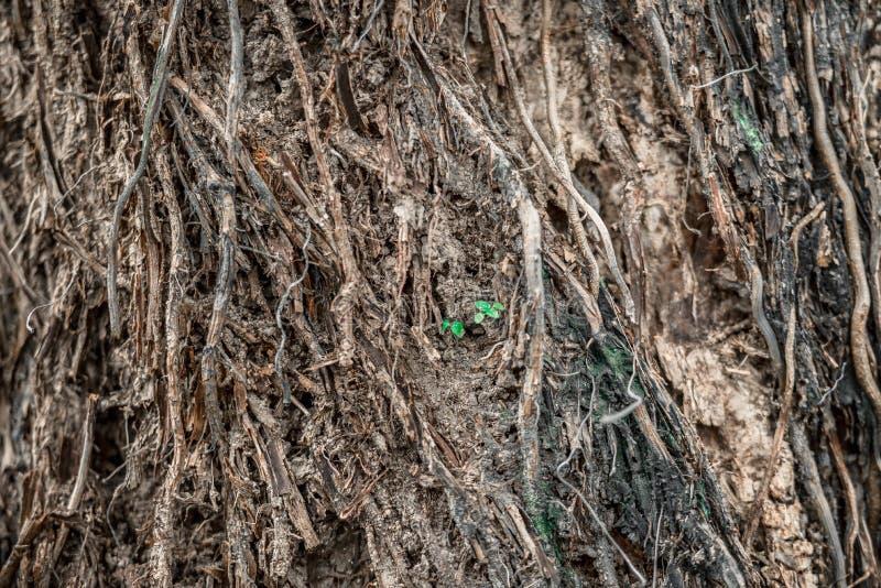 Jeunes plantes d'arbre photographie stock libre de droits